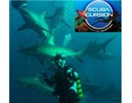 ScubaXcursion Come Scuba with us on the Aliwal Shoal