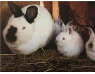 RABBIT FARM FOR SALE!!!!