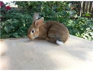 Beautiful lovely Rabbits for sale ...