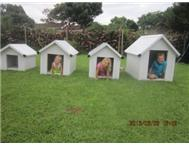 Dog Kennels in Pet Food & Products KwaZulu-Natal Scottburgh - South Africa