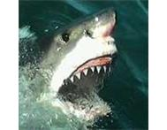 AAAX Shark Cage Diving Mega Special in Gansbaai.