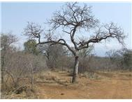 Vacant land / plot for sale in Hoedspruit