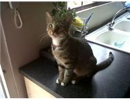 URGENT APPEAL - 2YR OLD SPAYED GIRL CAT NEEDS HOME