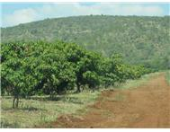 Farm for sale in Tzaneen