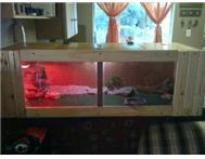 Bearded dragon and cage for sale. Other Gauteng