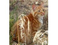 Hi my name is Piepiekies I am a 5 year old male ginger cat
