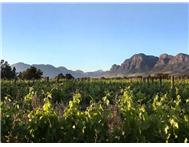Farm for sale in Val De Vie Winelands Lifestyle
