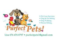 Professional Pet Sitting in Pet Services Western Cape Sedgefield - South Africa
