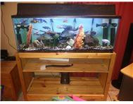 4ft Tropical Chichlid s tank complete for sale