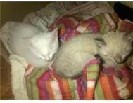 Kittens FREE to loving homes in East London Area