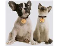 Dog/Cat Flea Repellent in Pet Food & Products Western Cape Bloubergstrand - South Africa
