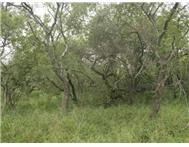 R 200 000 | Vacant Land for sale in Kampersrus Hoedspruit Limpopo
