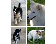 4 Doggies Seeking Homes- Perfect Family Pets