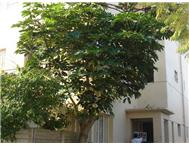 1 Bedroom Apartment / flat to rent in Southernwood