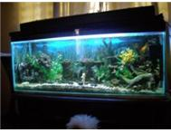 Custom size Aquarium tanks