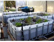 Aquaponics System Solution to High Food Cost.