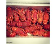 R50 CRAYFISH FRESHFROZEN DIRECT FROM FACTORY