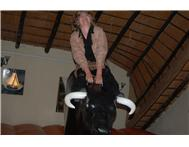 Rodeo Bull for hire @ R2000 for 5 hours