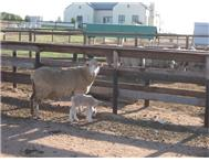 Farm for sale in Jacobsbaai