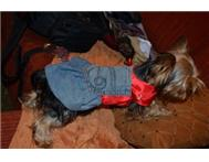 Dog Dress - Diva In Denim in Pet Food & Products Eastern Cape East London - South Africa