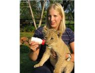 Jinnie Villani A Holiday With Lion Cubs in Activities & Hobbies North West Hartbeespoort & Dam - South Africa