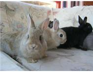 Various rabbits for sale