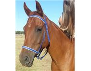 Anglo Arab Mare for Sale !!