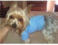 Dog Clothes in Pet Food & Products Gauteng Boksburg - South Africa
