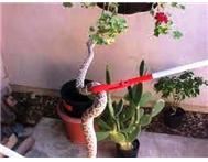 Unwanted Snakes Pretoria East