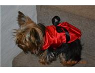 Dog Dress - Belle Of The Ball in Pet Food & Products Eastern Cape East London - South Africa