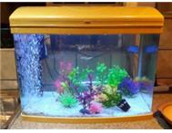 Beautiful Super Baby Curved Glass Fish Tank All Inclusive!!