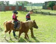 Animal & Pony Parties For Kids