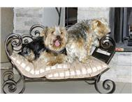 Doggie beds custom made from wrought iron.