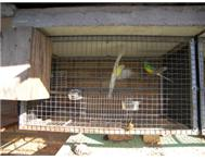 selling birds cages Paarl