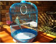 Beautiful budgie and cage for sale