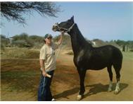 amazing horse for sale