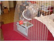 Automatic Water feeder for Birds an... Brakpan