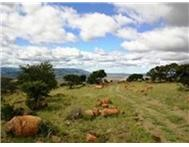 Farm for sale in Cradock