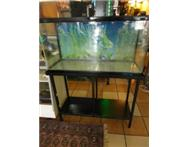 jebo fish tank with a dolphin c - 1600 water pump