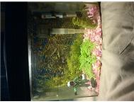 1foot aquarium