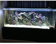 Marine (Saltwater) Aquarium for Sale - BARGAIN !!