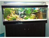 Gapedi Tanks Revamped Aquariums and Equipment (All Plug n Play)