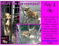 Ray & Ally - 2 sisters very stressed in kennels