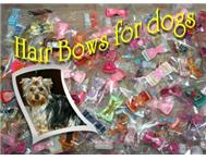 Hair Bows in Pet Food & Products Free State Allanridge - South Africa