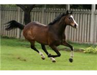 Horse Riding Lessons For Adults Horse Riding For Adults in Activities & Hobbies Gauteng Midrand - South Africa