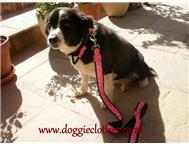 Collars & Leads by Doggie Clothes