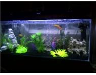 Beautiful 4ft Fish Tank Aquarium with LED Lighting (2months old)