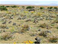 Undeveloped Farm in Farms & Plots for Sale Northern Cape Sutherland - South Africa