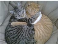 Cats looking for a good home Boksburg