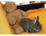 Furry Friends - Easter Bunny!